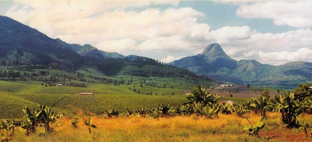 Investir au Mozambique ? Cinq secteurs prometteurs